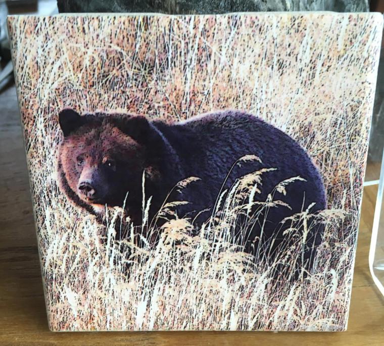 Ceramic Tile - Grizzly Bear 'Big Girl'  4.25 In x 4.25 In
