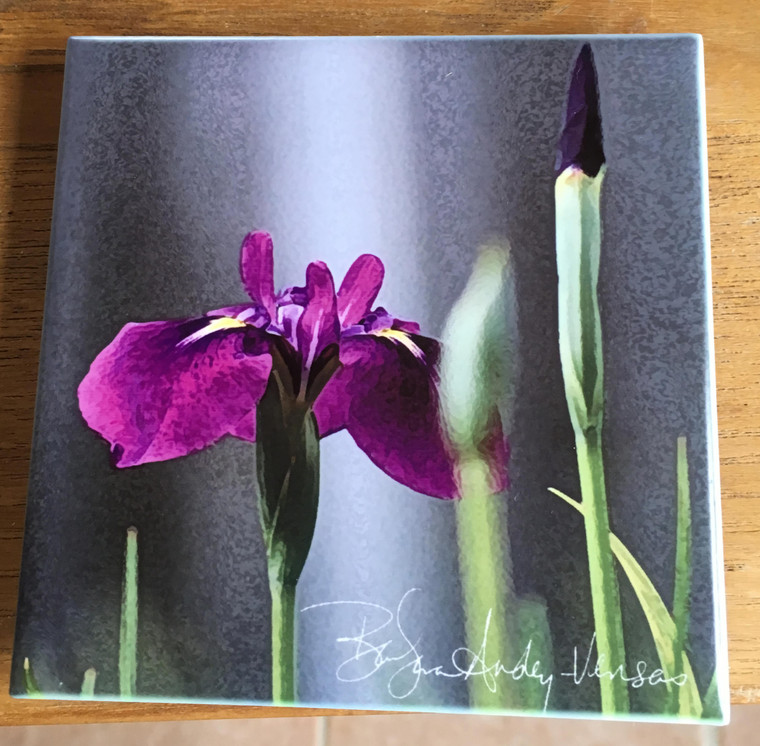 Ceramic Tile or Coaster - Iris Laevigata  4.25 In x 4.25 In