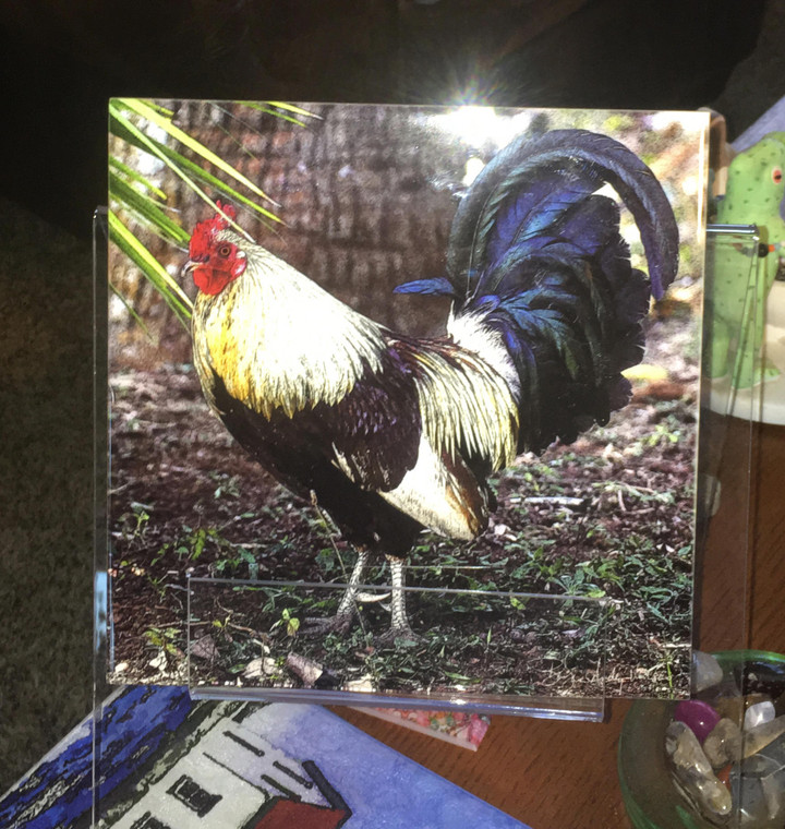 Decorative Tile - Rooster 8 in x 8 in