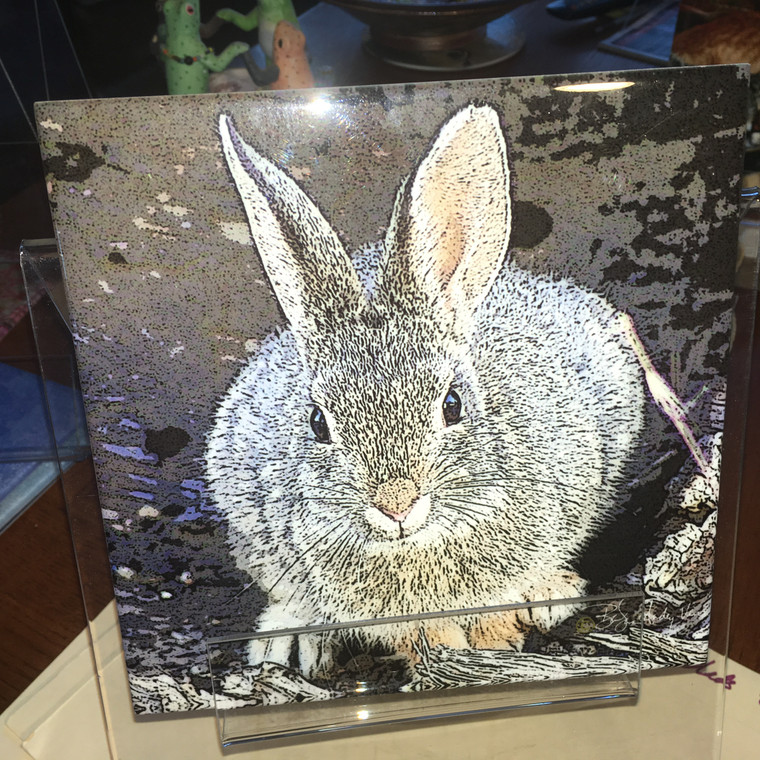 Decorative Tile - Desert Cottontail 8 In x 8 In