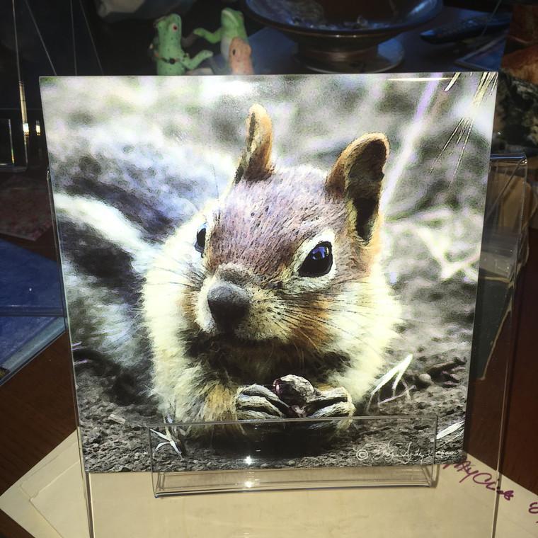 Decorative Tile - Ground Squirrel 8 in x 8 in