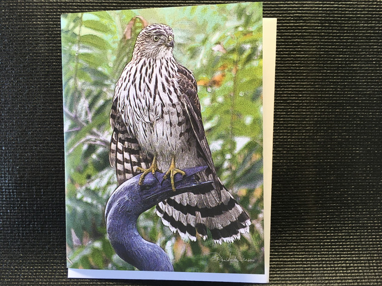10 Cooper's Hawk Blank Note Cards