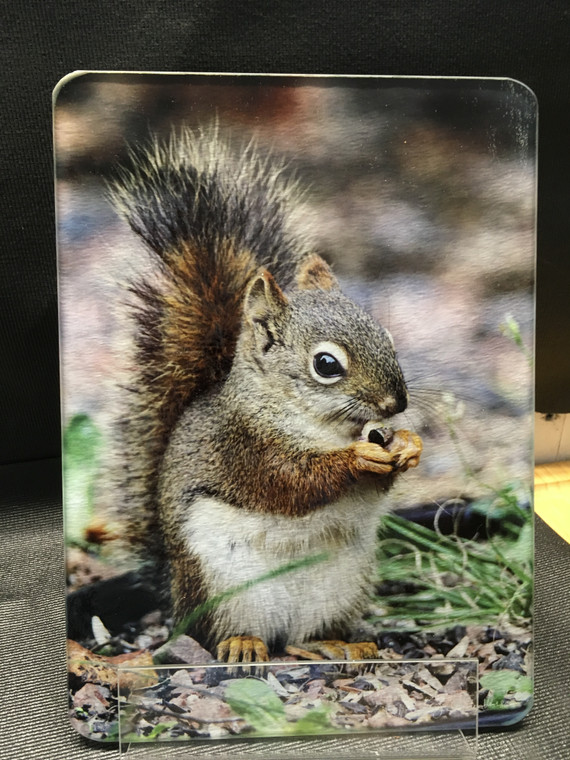 Red Squirrel MN- Glass Cutting Board - 7.75in x 10.75in