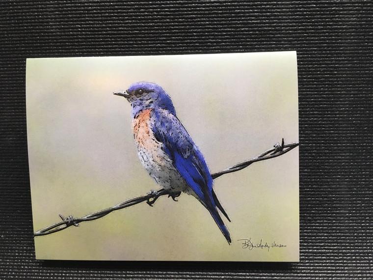 10 Western Bluebird Blank Note Cards