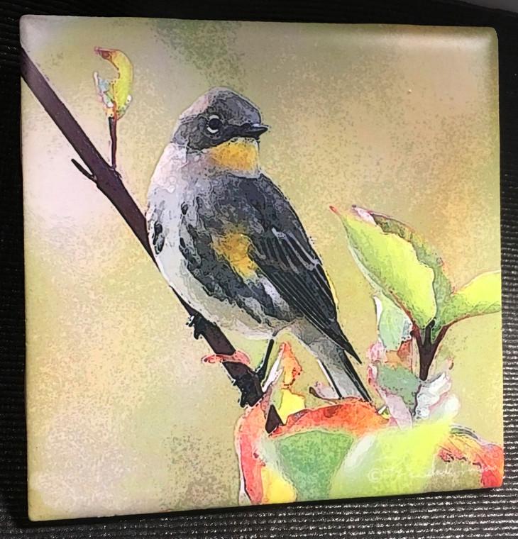 Ceramic Tile - Yellow Rumped Warbler  4.25 In x 4.25 In