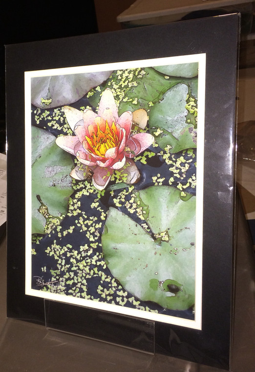 Pink Lily - Matted Print 11 x 14