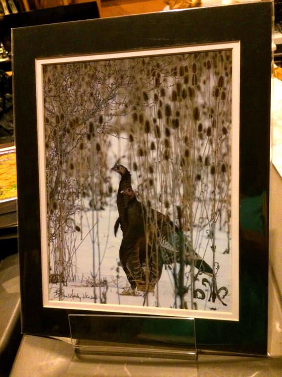 Wild Turkey - Matted Print 11 x 14