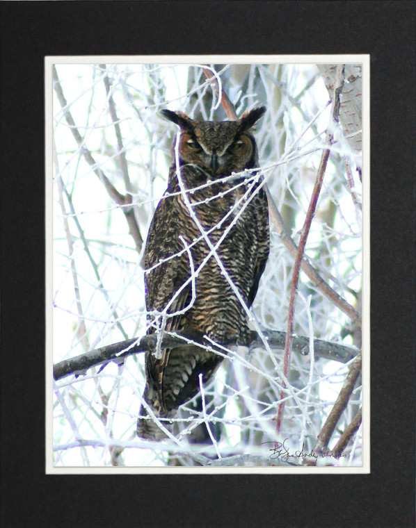 Great Horned Owl - Matted Print 11 x 14
