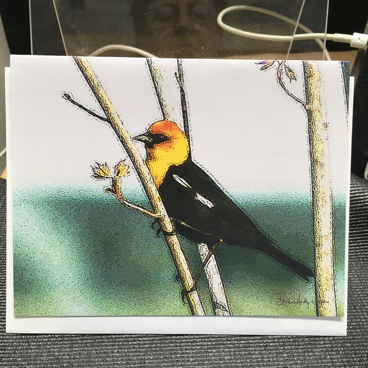 10 Yellow-Headed Blackbird Blank Note Cards