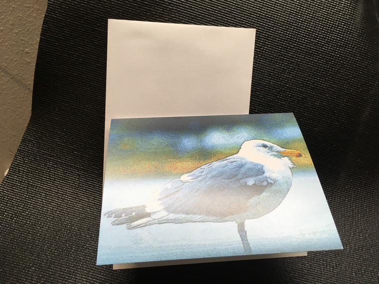 10 Gull Blank Note Cards