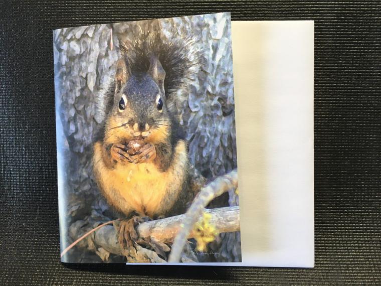 10 Douglas Squirrel  Blank Note Cards