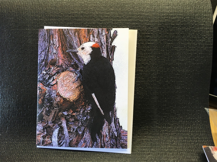 10 White Headed Woodpecker Blank Note Card