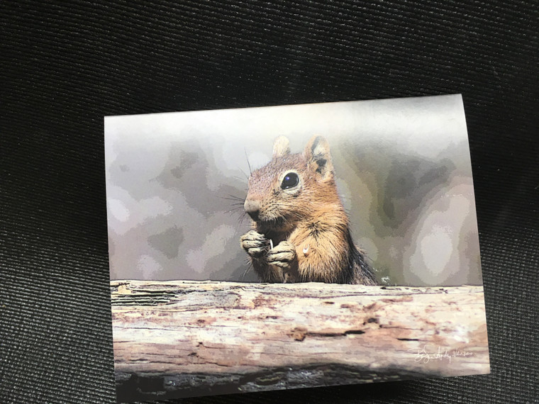 10 Golden Mantled Ground Squirrel Blank Note cards
