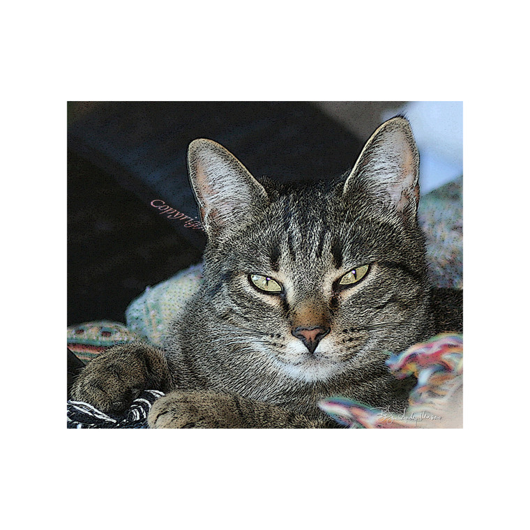 10 Cat Gray Tabby Blank Note Cards