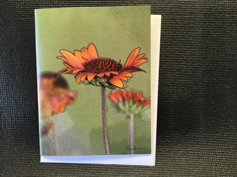 10 Galardia  Blank Note Cards
