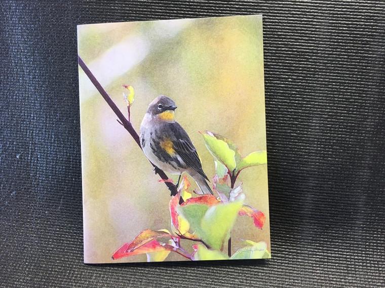 10 Warbler Blank Note Cards