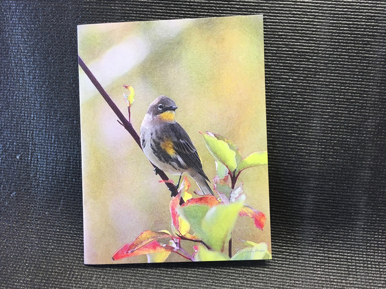 10 Warbler Blank Note Cards