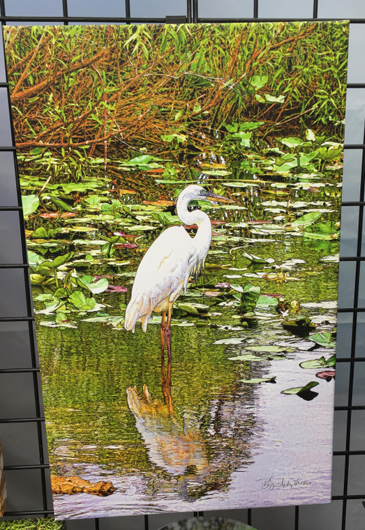 Great White Heron (Facing Right) Canvas Print 26 In x 16 In x 1.5 In