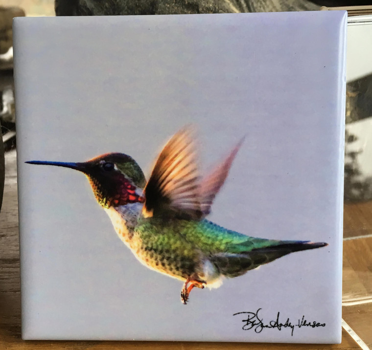 Ceramic Tile or Coaster - Anna's Hummingbird Flying  4.25 In x 4.25 In