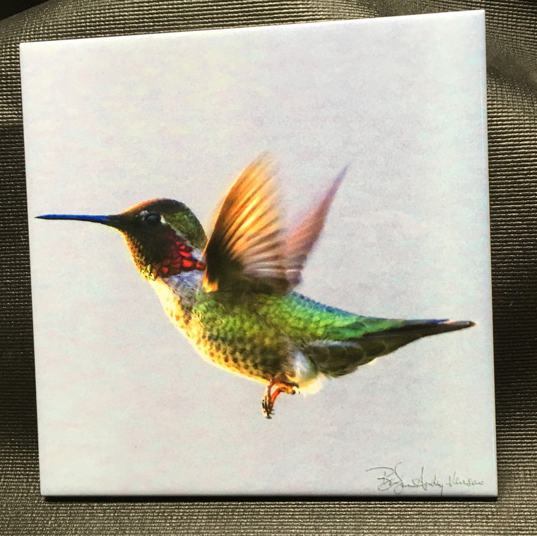 Decorative Tile - Anna's Hummingbird Flying  8 In x 8 In