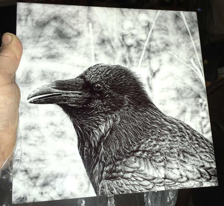 Decorative Tile - Black & White Raven 8 in x 8 in
