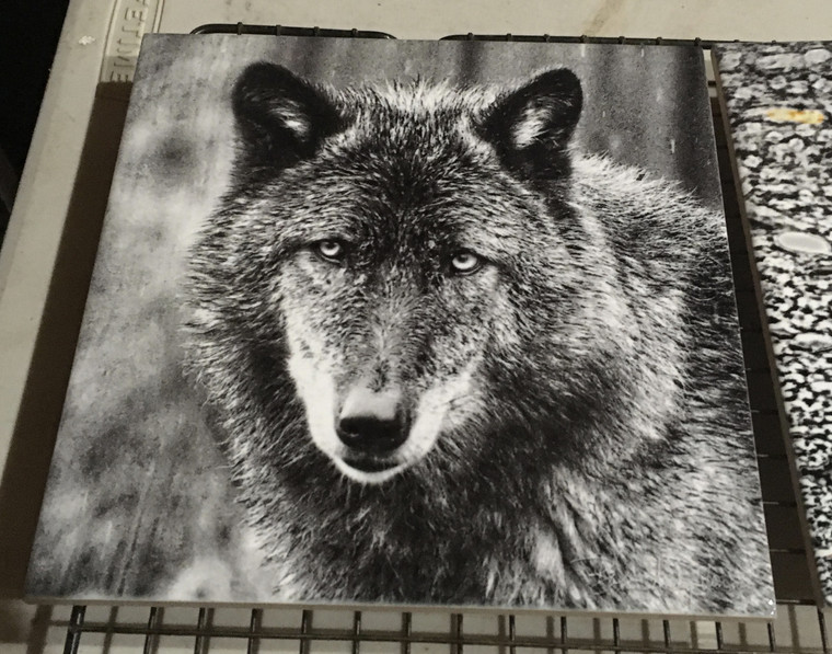 Decorative Tile - Wolf (Black & White) 8 in x 8 in