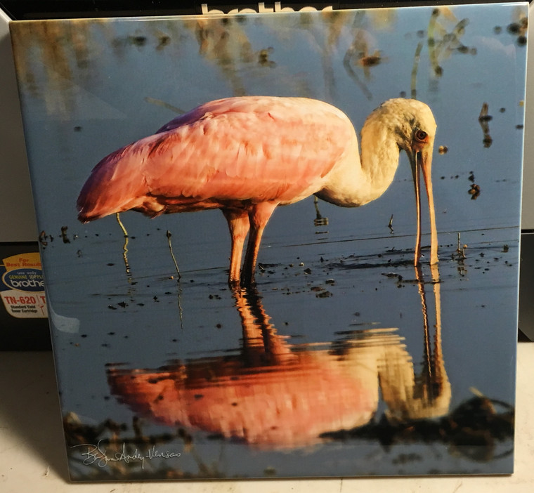 Decorative Tile -  Roseate Spoonbill 8 in x 8 in
