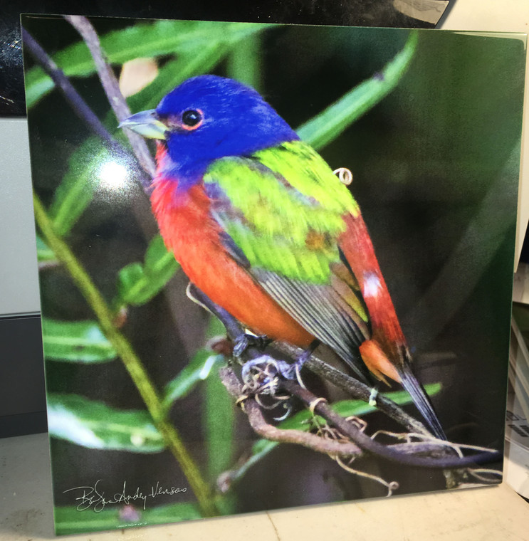 Decorative Tile -  Painted Bunting 8 in x 8 in