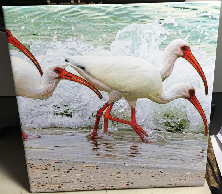 Decorative Tile -  White Faced Ibis 8 in x 8 in