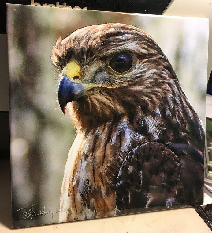 Decorative Tile -  Red Shouldered Hawk  8 in x 8 in
