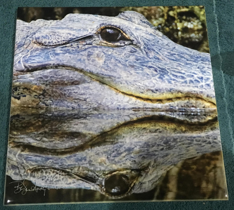 Decorative Tile -  Gator  8 in x 8 in
