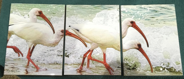 White Faced Ibis Tile Mosaic - 3 - 6 x 8 in Tiles