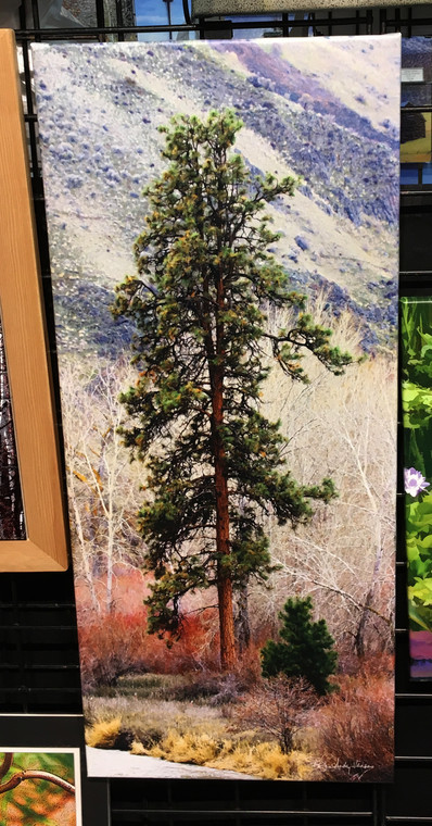 Canyon Pine Canvas Print -  30 in x 13 in x 1.5 in