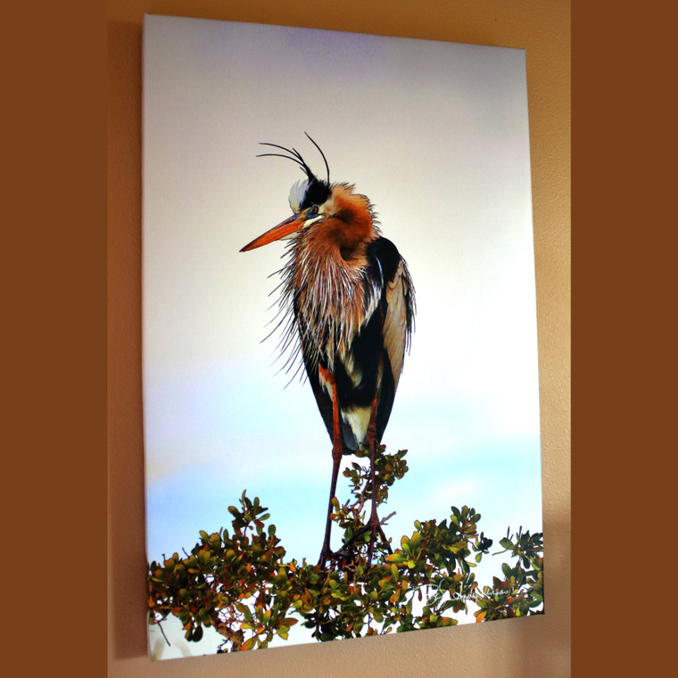 Fort Myers Heron - Canvas Print 30 in x 20 in x 1.5 in