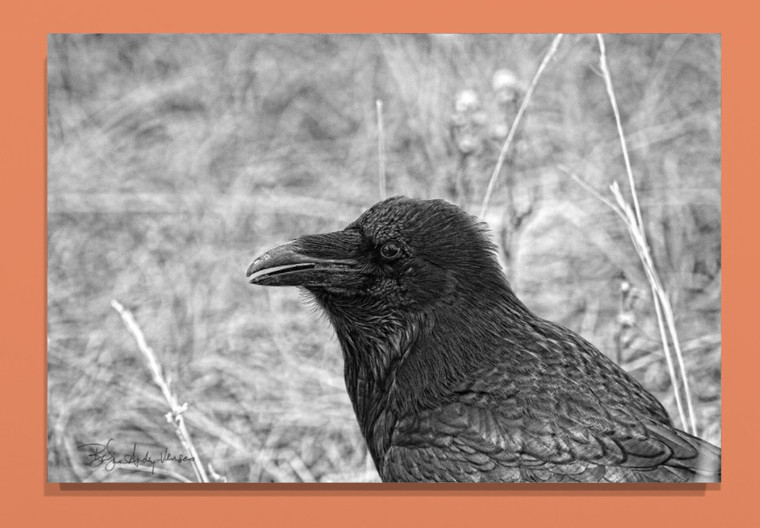Black and White Raven Canvas print - 32 x 48 x 1.5 inches