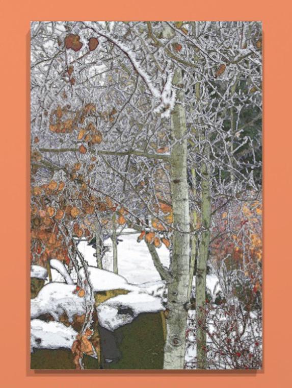 Winter Aspen Canvas print - 16 x 20  x .75