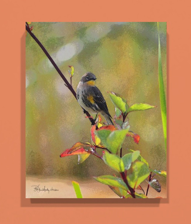 Warbler Canvas Print 20 In x 16 In x 1.5 In