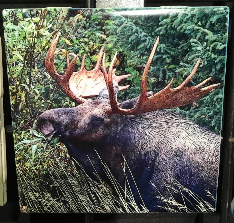Ceramic Tile or Coaster - Bull Moose 4.25 In x 4.25 In