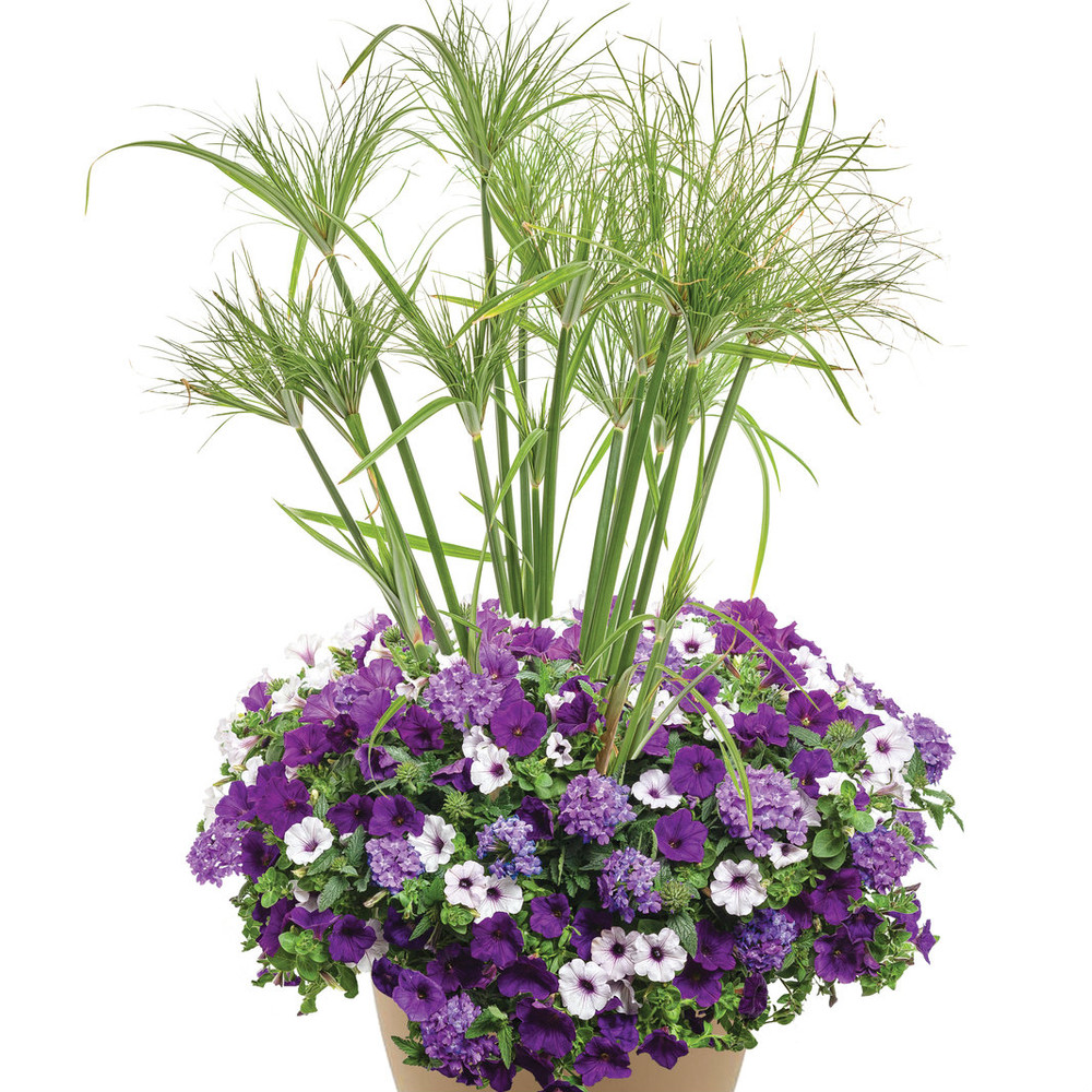 """Lilac Festival 16"""" Planter"""