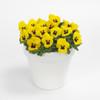 Viola Sorbet® XP Yellow Blotch