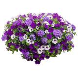 """Lilac Festival 12"""" Hanging Basket"""