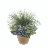 "Blue Frost 16"" Planter"