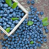 Vaccinium Duke (Blueberry)