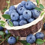 Vaccinium Northland (Blueberry)