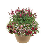 "Strawberry Sauce 16"" Planter"