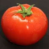 Tomato Tempting Tomatoes™ 'Garden Treasure'