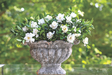 Gardenia Jubilation™