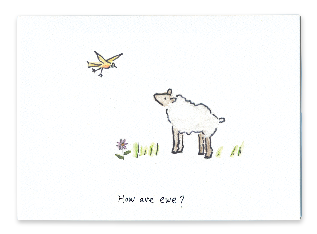 How Are Ewe?
