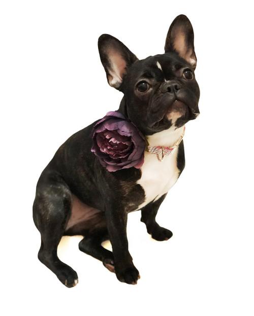Purple Dog Collar Flower