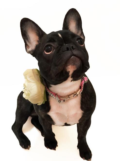 Ivory Dog Collar Flower